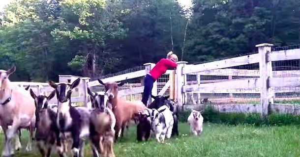 This Video Of Girls Running With Goats Is Ridiculously Adorable